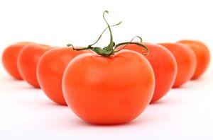Es lohnt sich auf Tomaten zu warten