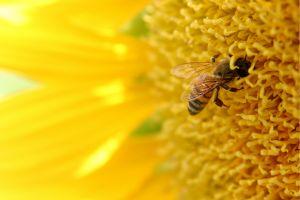Fleißig wie ein BienchenFleißig wie ein Bienchen